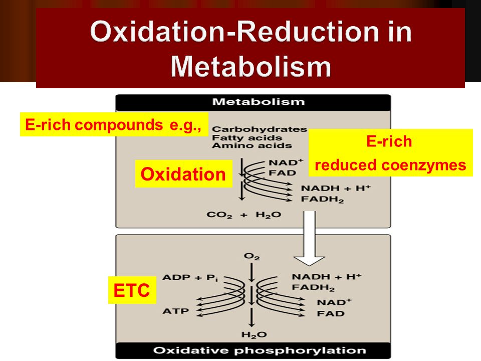Oxidation-Reduction in Metabolism