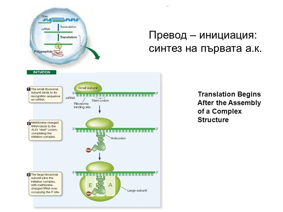 Превод – инициация: синтез на първата а.к.