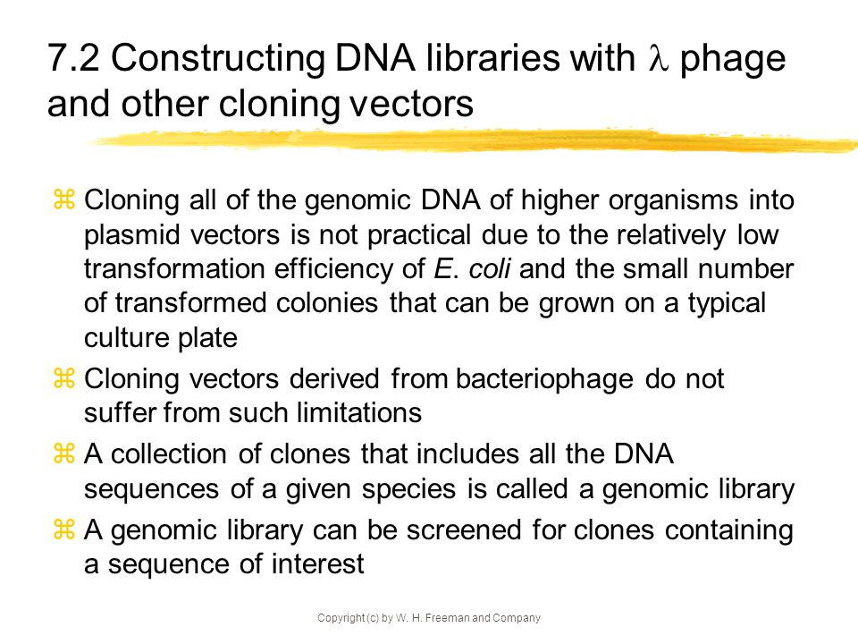 7.2 Constructing DNA libraries with  phage and other cloning vectors