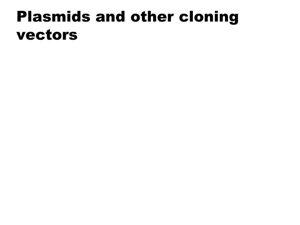 Plasmids and other cloning vectors