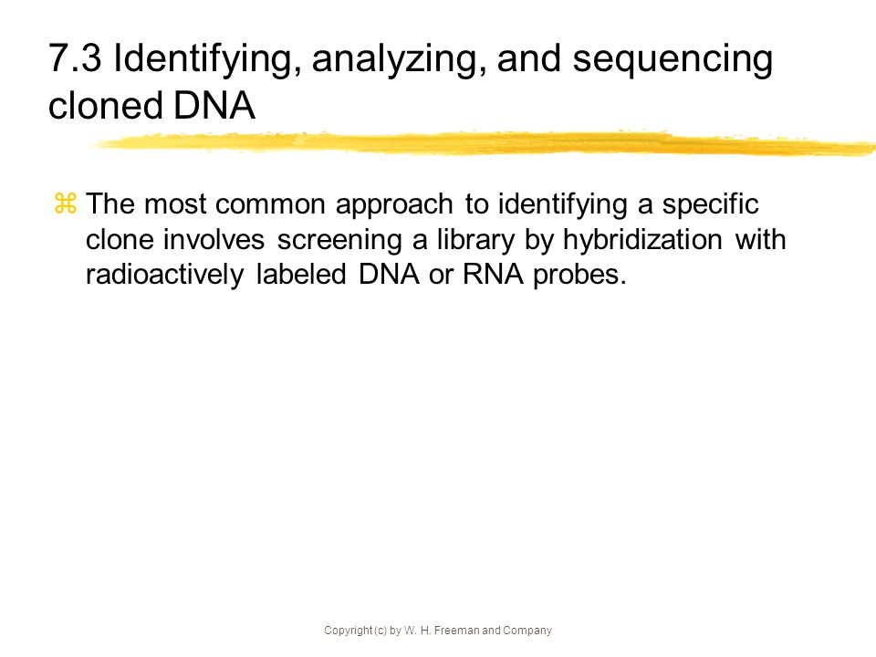 7.3 Identifying, analyzing, and sequencing cloned DNA
