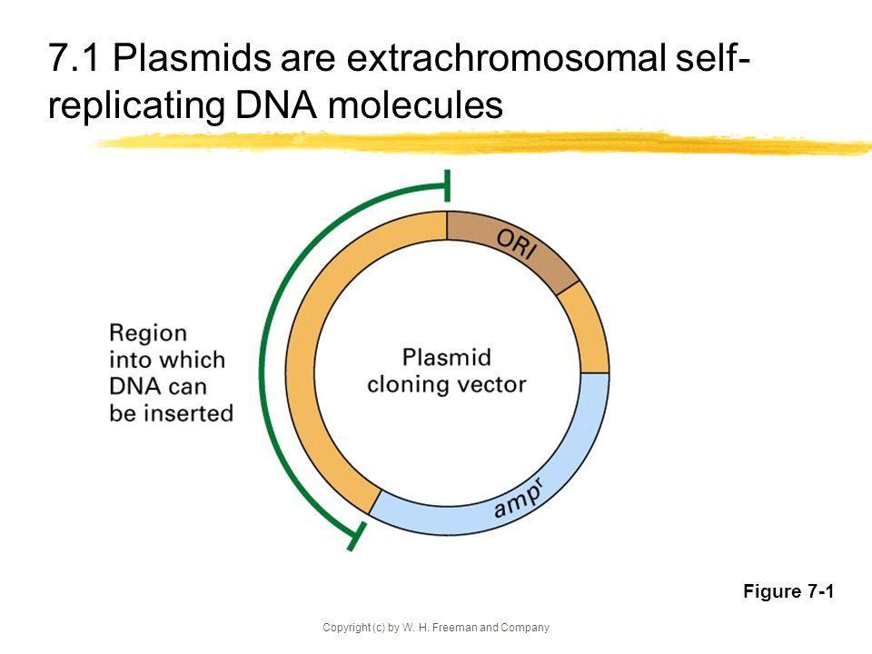 7.1 Plasmids are extrachromosomal self-replicating DNA molecules