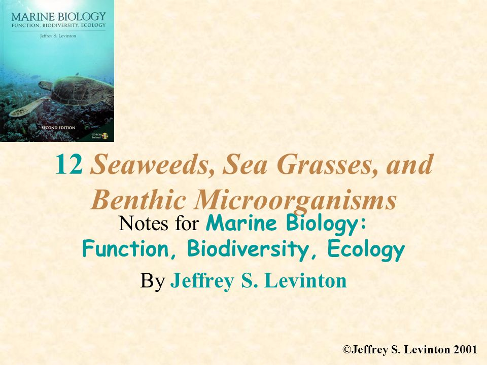 12 Seaweeds, Sea Grasses, and Benthic Microorganisms