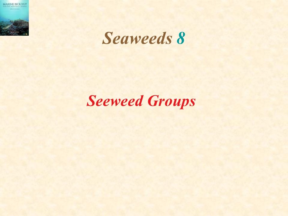 Seaweeds 8 Seeweed Groups