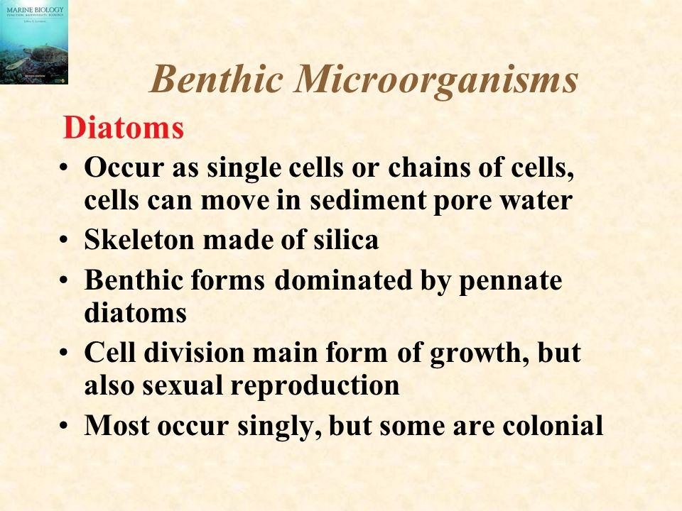 Benthic Microorganisms