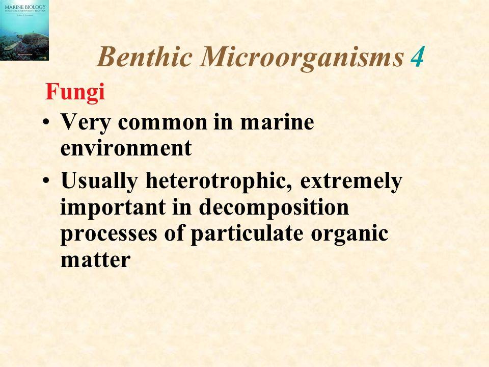 Benthic Microorganisms 4