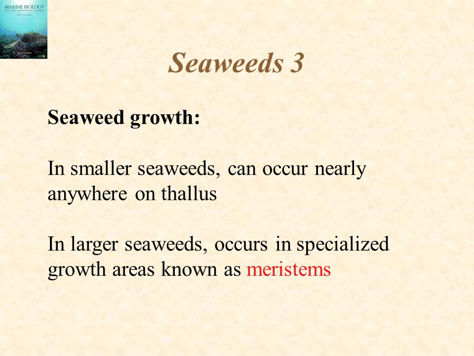 Seaweeds 3 Seaweed growth: In smaller seaweeds, can occur nearly