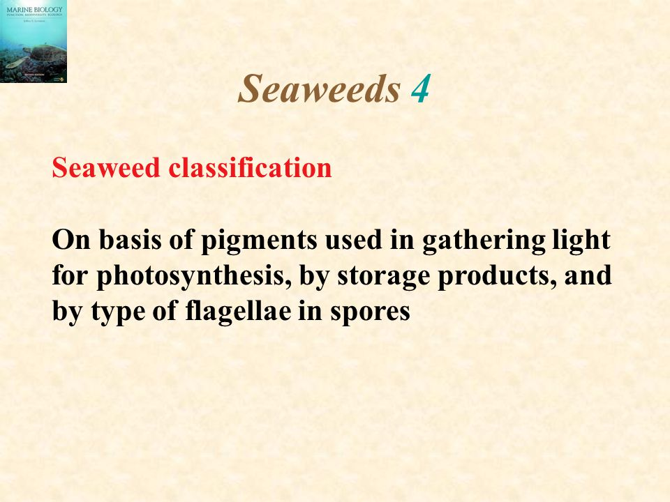 Seaweeds 4 Seaweed classification
