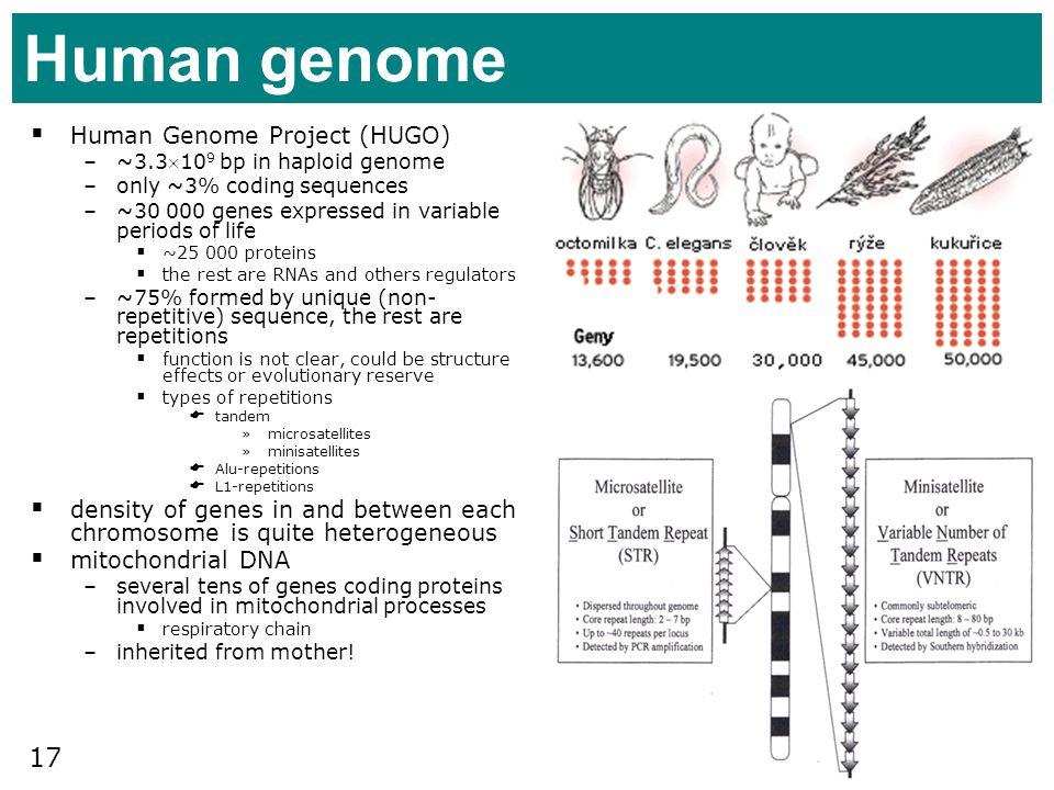 Human genome Human Genome Project (HUGO)