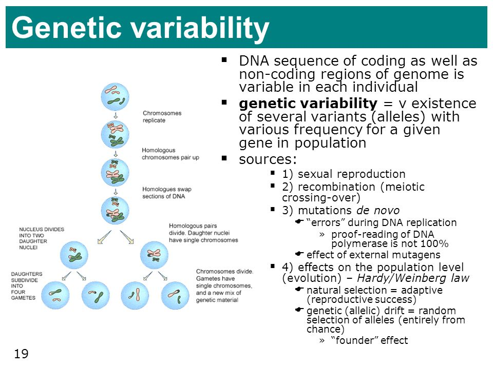 Genetic variability DNA sequence of coding as well as non-coding regions of genome is variable in each individual.