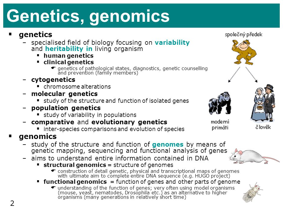 Genetics, genomics genetics genomics