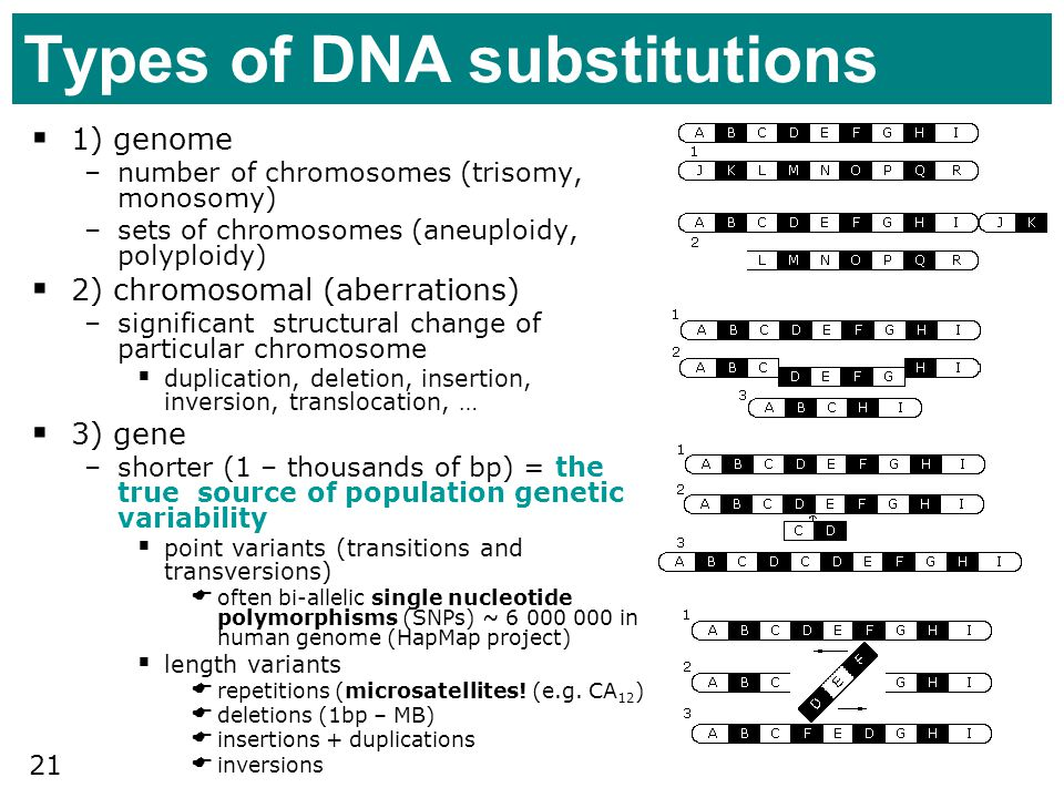 Types of DNA substitutions