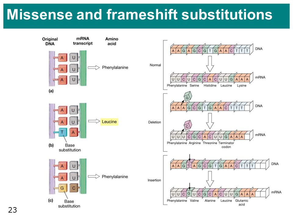 Missense and frameshift substitutions
