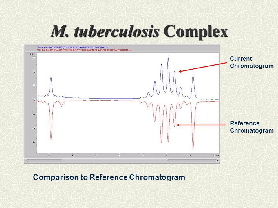 M. tuberculosis Complex