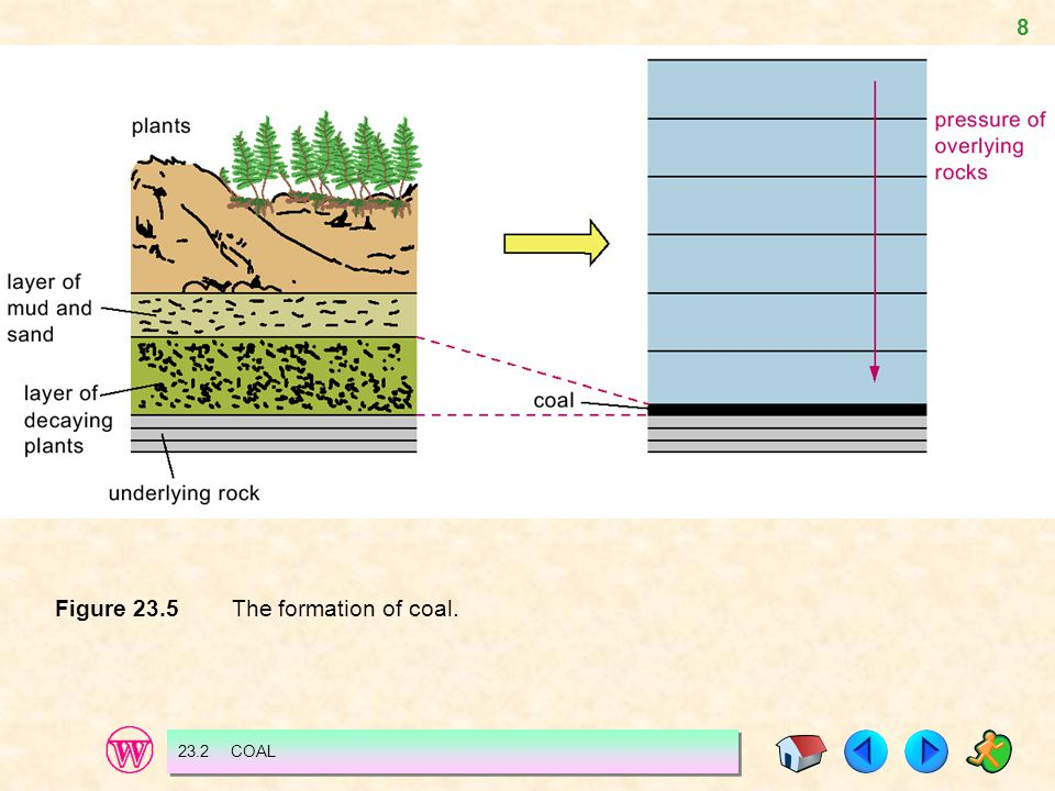 Figure 23.5 The formation of coal.