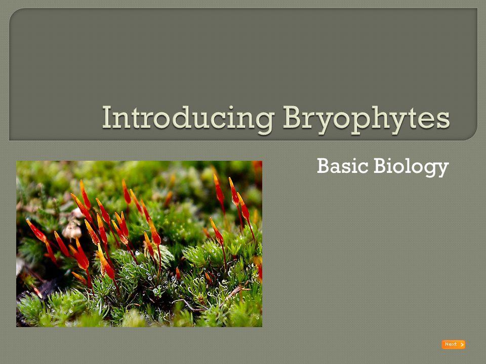 Introducing Bryophytes