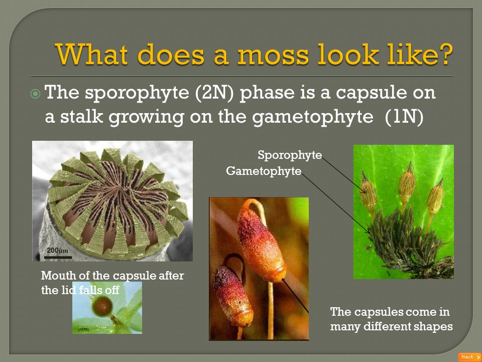 What does a moss look like