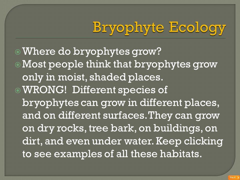 Bryophyte Ecology Where do bryophytes grow