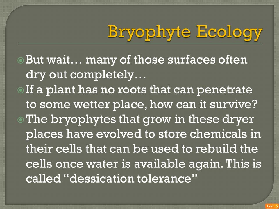 Bryophyte Ecology But wait… many of those surfaces often dry out completely…