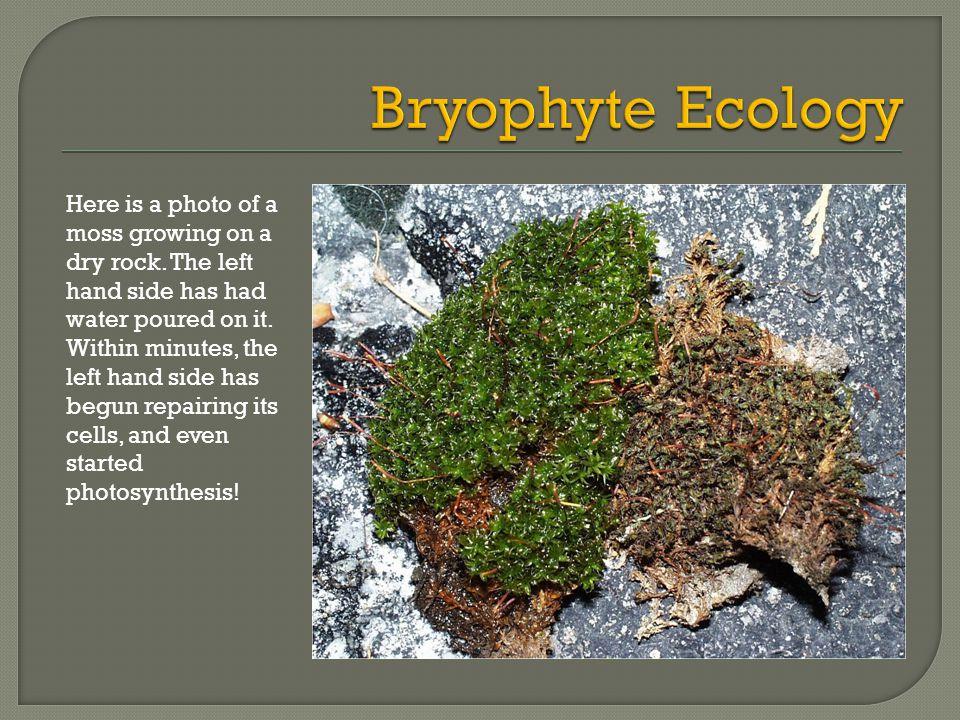 Bryophyte Ecology