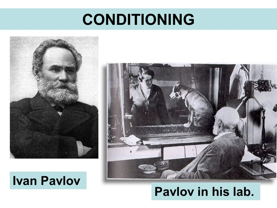 CONDITIONING Ivan Pavlov Pavlov in his lab.