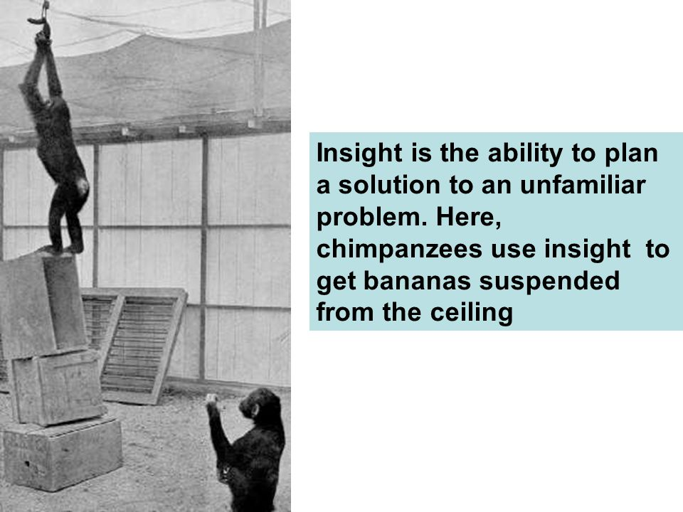 Insight is the ability to plan a solution to an unfamiliar problem
