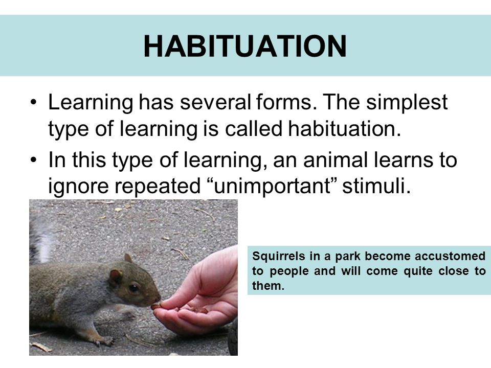 HABITUATION Learning has several forms. The simplest type of learning is called habituation.