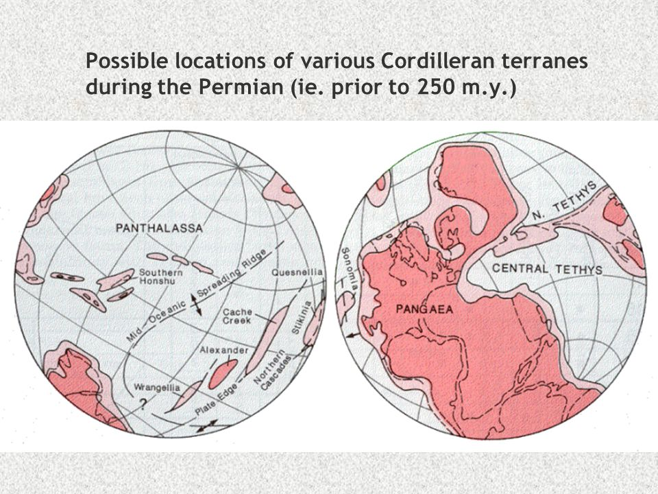 Possible locations of various Cordilleran terranes during the Permian (ie. prior to 250 m.y.)