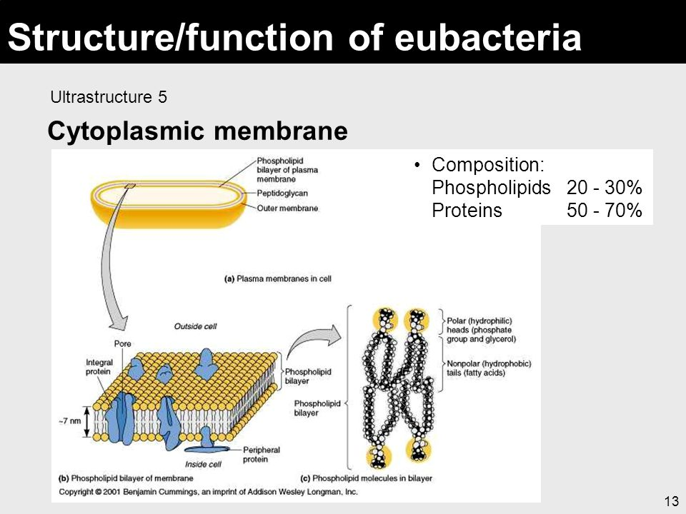 Structure/function of eubacteria