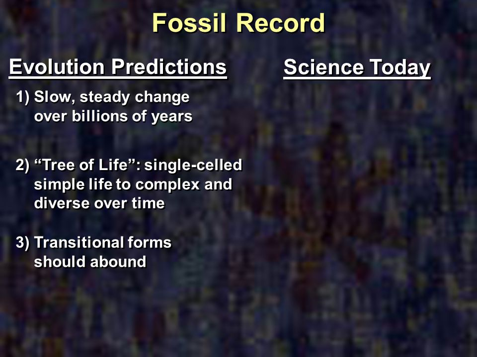 Fossil Record Evolution Predictions Science Today