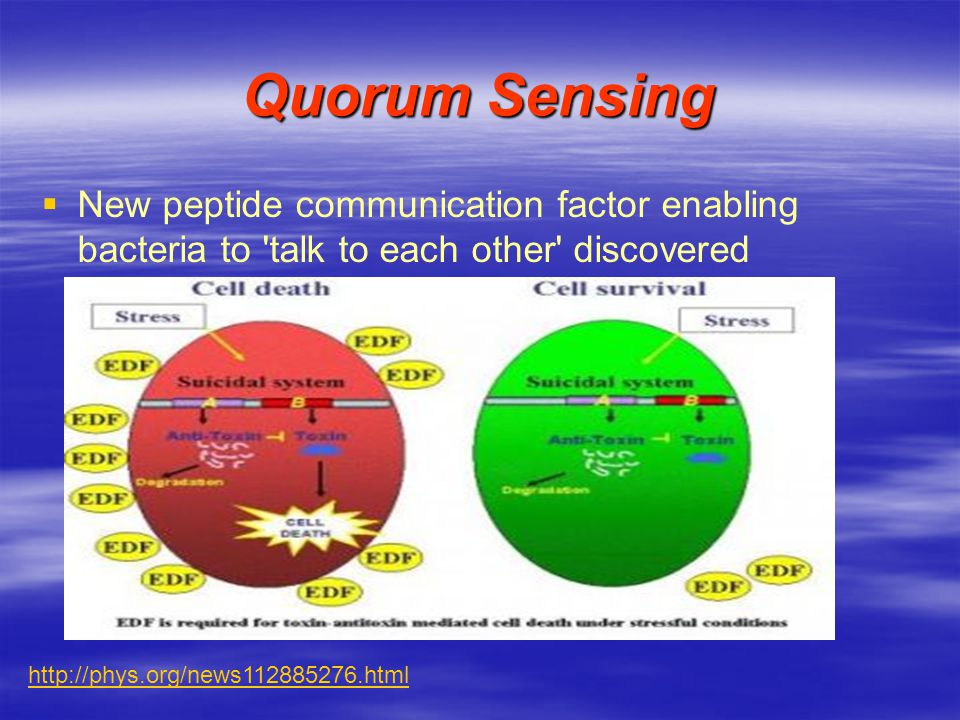 Quorum Sensing New peptide communication factor enabling bacteria to talk to each other discovered.