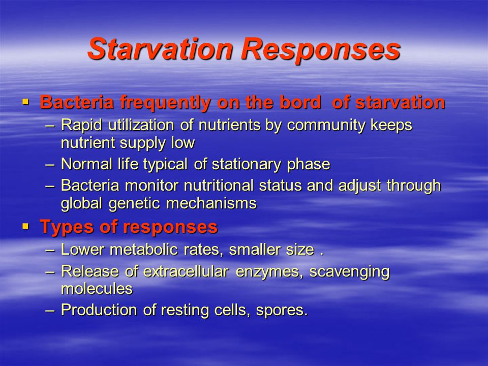 Starvation Responses Bacteria frequently on the bord of starvation
