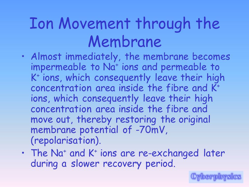 Ion Movement through the Membrane