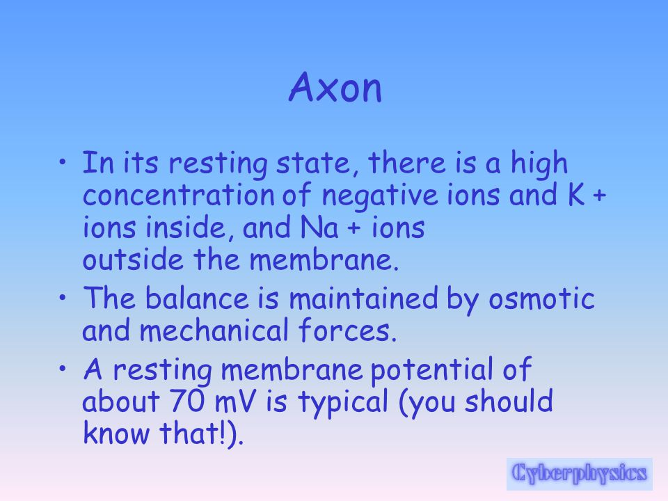 Axon In its resting state, there is a high concentration of negative ions and K + ions inside, and Na + ions outside the membrane.