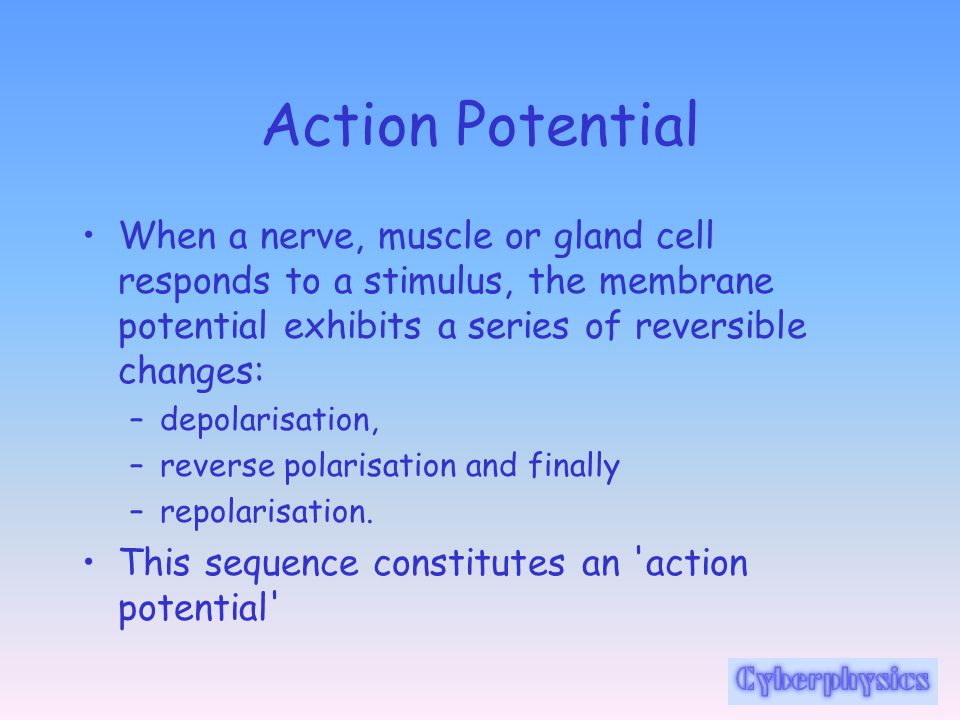 Action Potential When a nerve, muscle or gland cell responds to a stimulus, the membrane potential exhibits a series of reversible changes:
