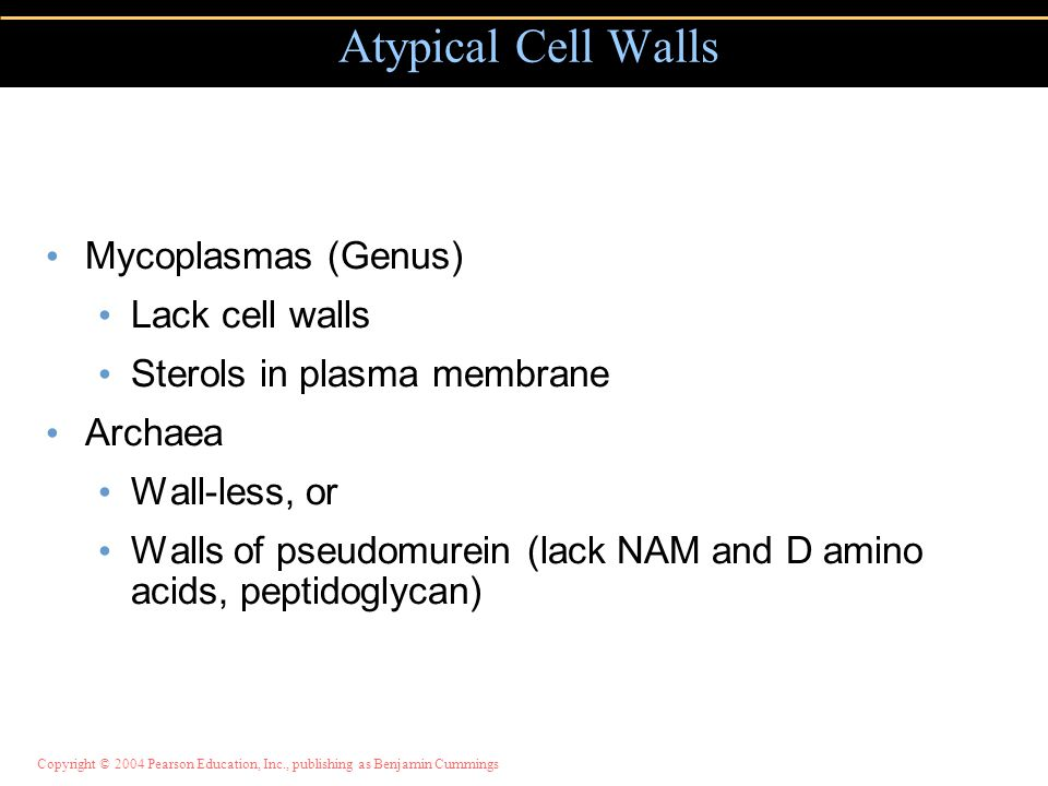 Atypical Cell Walls Mycoplasmas (Genus) Lack cell walls
