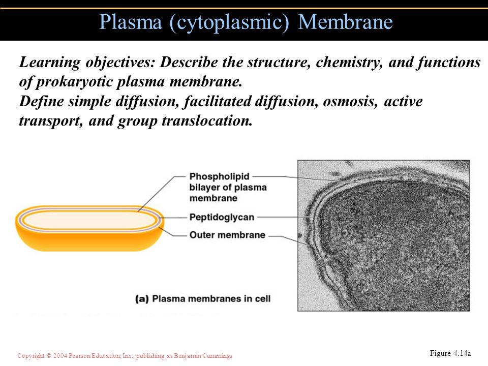 Plasma (cytoplasmic) Membrane