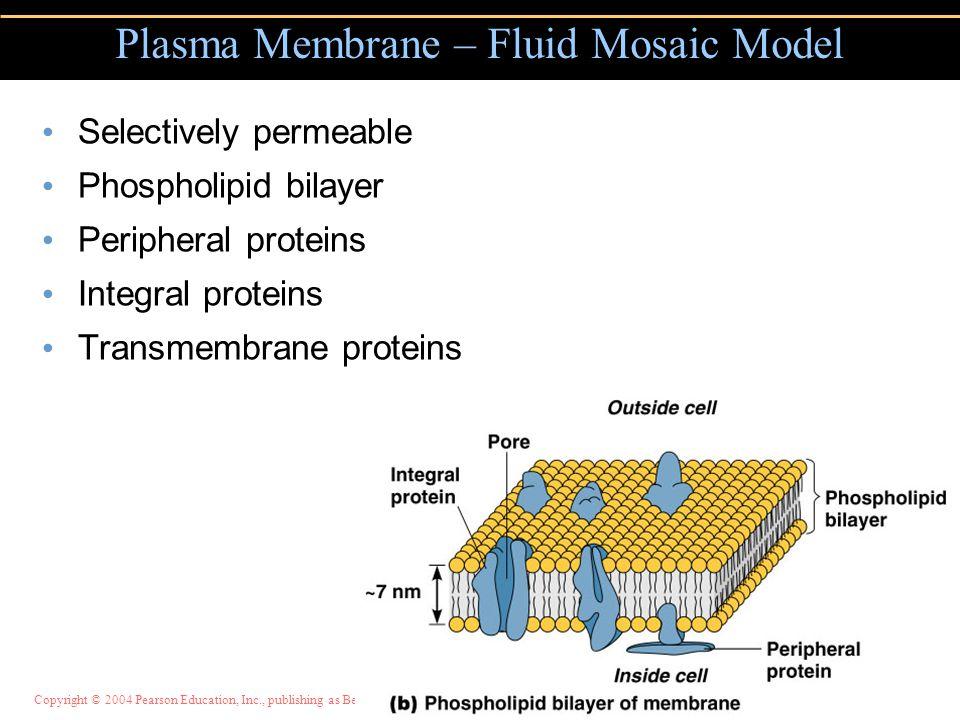 Plasma Membrane – Fluid Mosaic Model