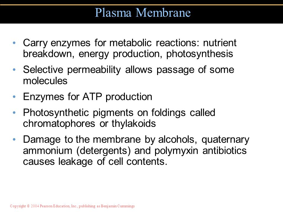 Plasma Membrane Carry enzymes for metabolic reactions: nutrient breakdown, energy production, photosynthesis.