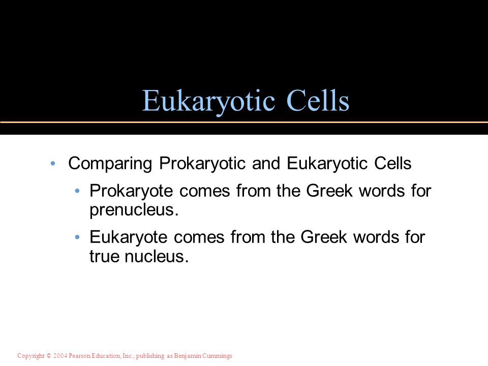 Eukaryotic Cells Comparing Prokaryotic and Eukaryotic Cells