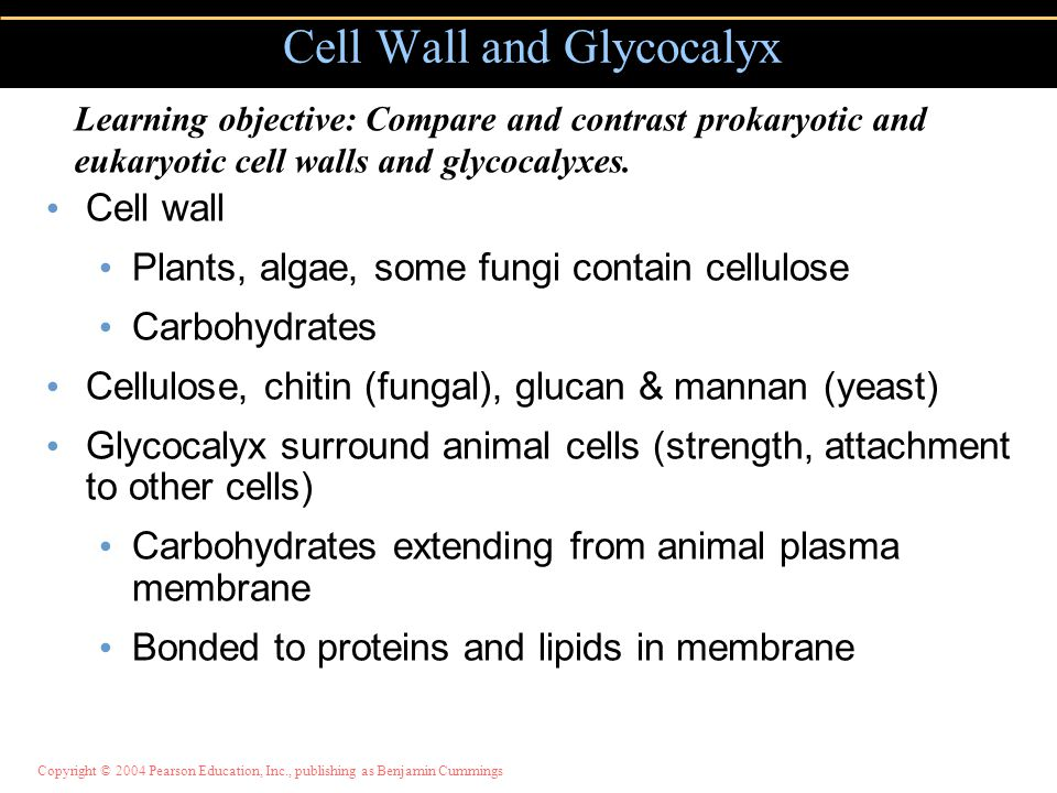 Cell Wall and Glycocalyx