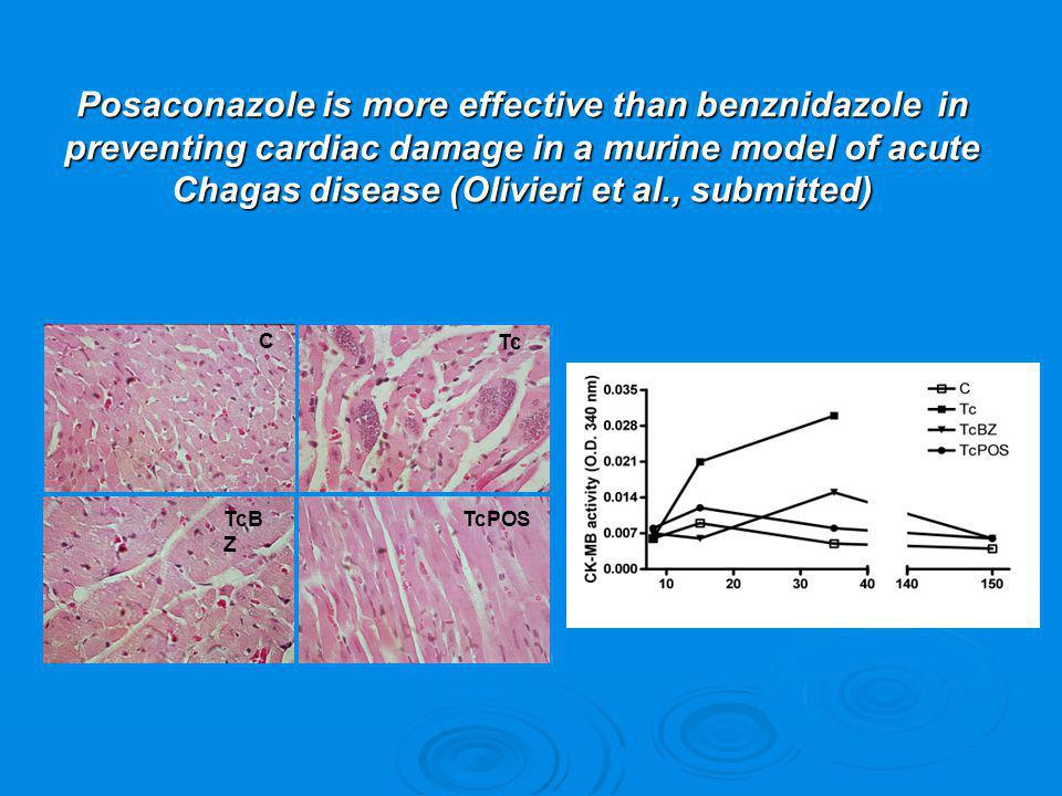Posaconazole is more effective than benznidazole in preventing cardiac damage in a murine model of acute Chagas disease (Olivieri et al., submitted)