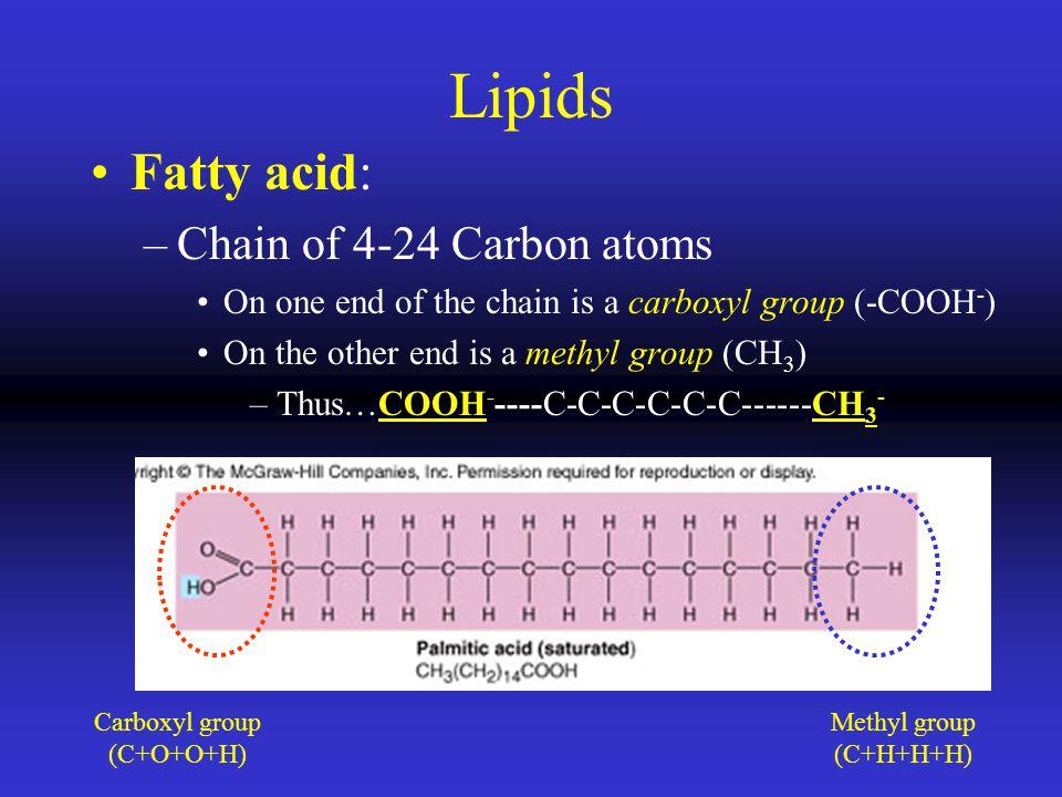 Lipids Fatty acid: Chain of 4-24 Carbon atoms