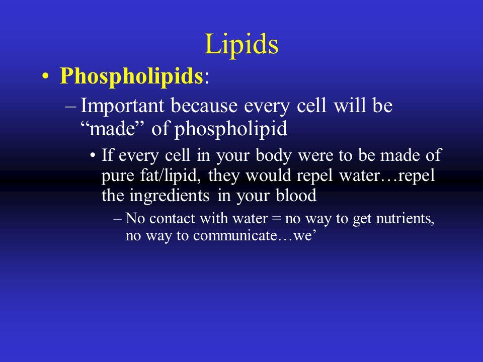 Lipids Phospholipids: