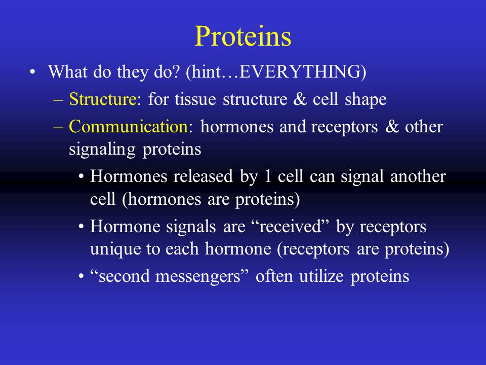 Proteins What do they do (hint…EVERYTHING)