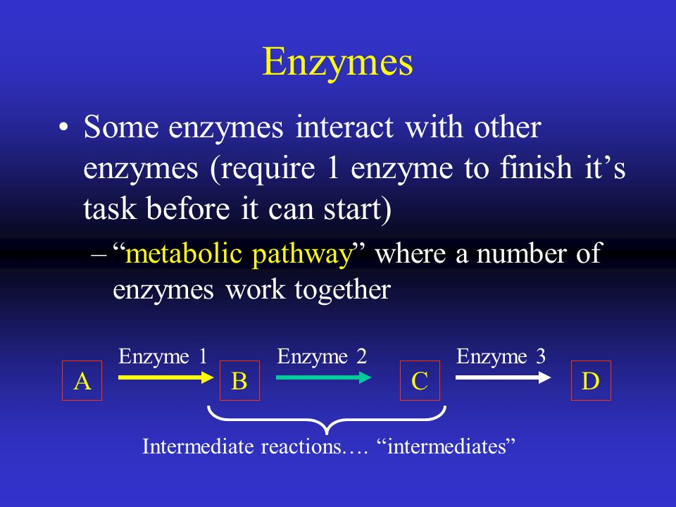 Enzymes Some enzymes interact with other enzymes (require 1 enzyme to finish it's task before it can start)