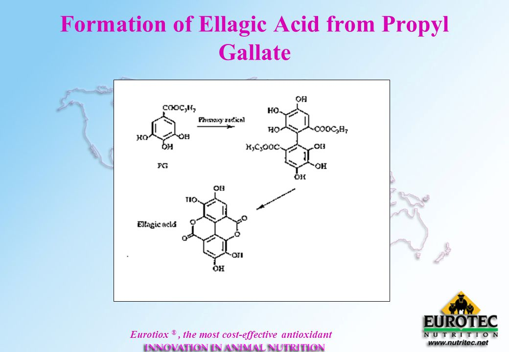 Formation of Ellagic Acid from Propyl Gallate