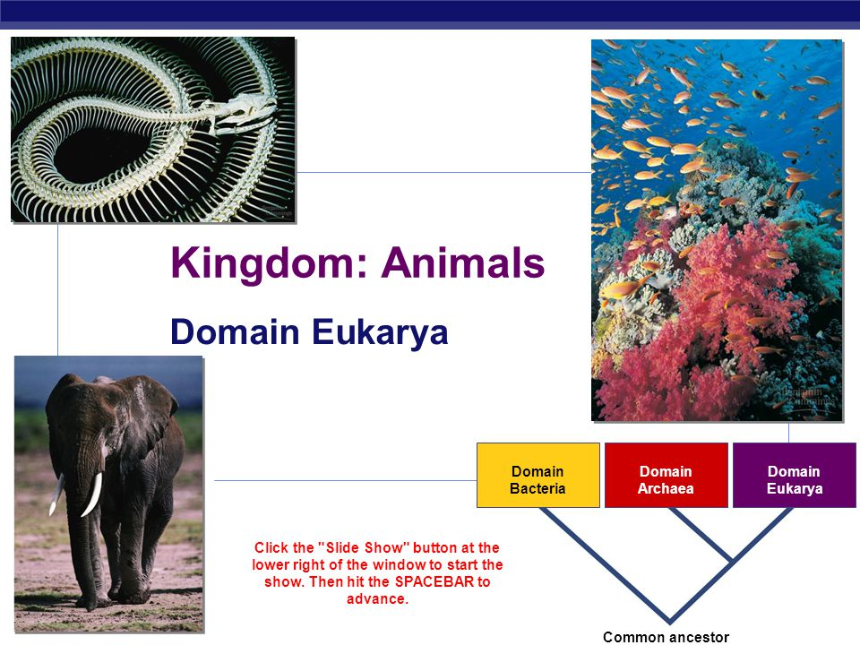 Kingdom: Animals Domain Eukarya 2007-2008 Domain Bacteria Archaea