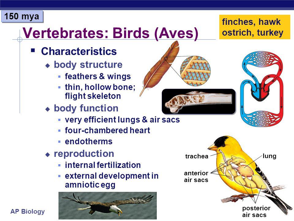 Vertebrates: Birds (Aves)