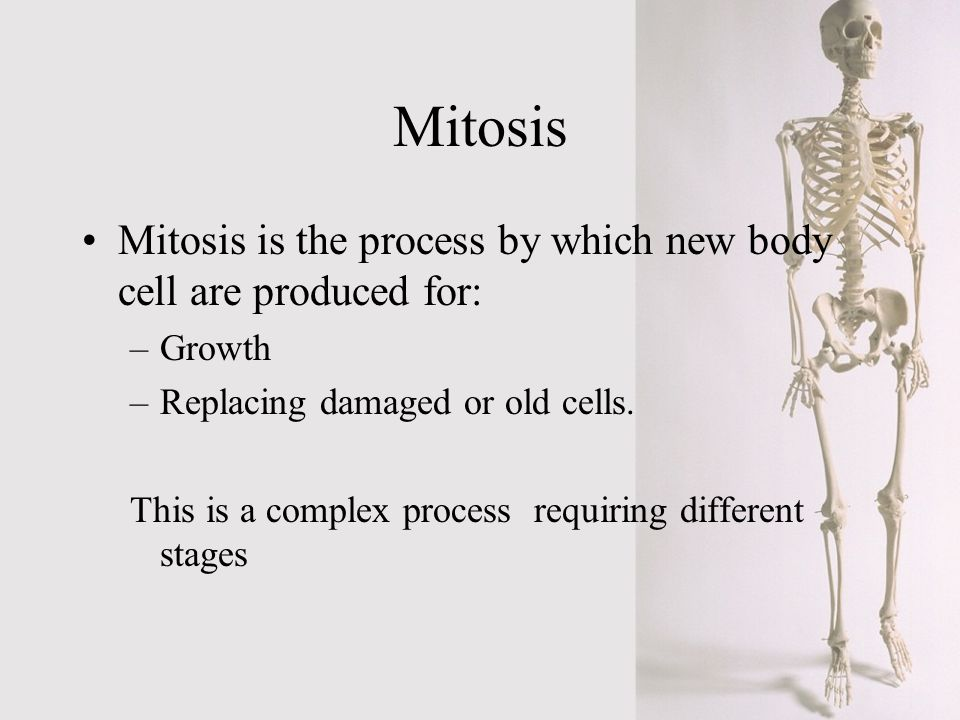Mitosis Mitosis is the process by which new body cell are produced for: Growth. Replacing damaged or old cells.